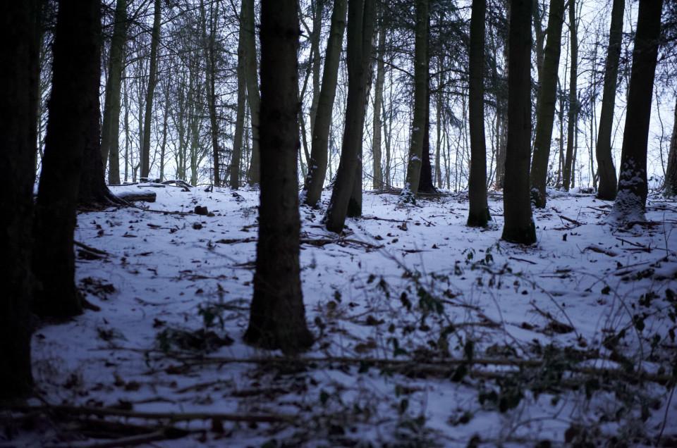 Vintertræer